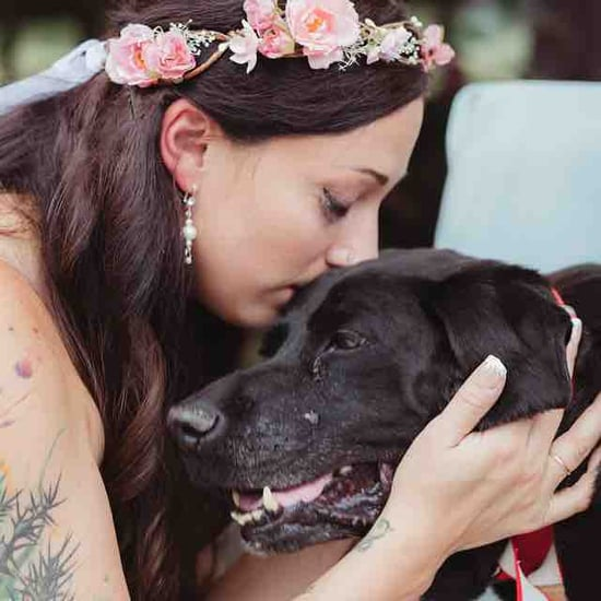 Old Dog Dies After Owner's Wedding