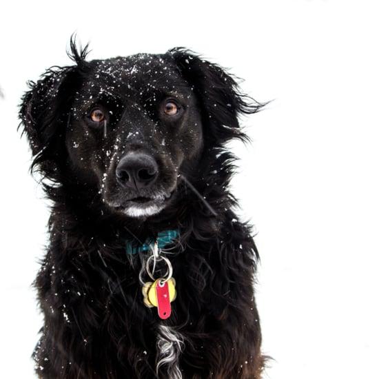 فيديو لكلب يلعب بالثلج للمرّة الأولى