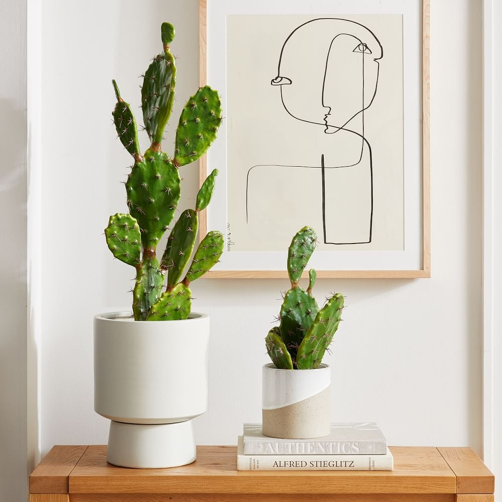 Faux Potted Flat Cacti