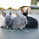 "Germans who settled in the Pennsylvania Dutch area told tales of the ""Osterhas,"" which refers to a hare, not a rabbit."