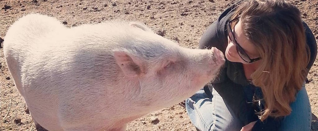 Yes, You Can Actually Visit (and Befriend) Pigs at This Awesome Sanctuary in Arizona