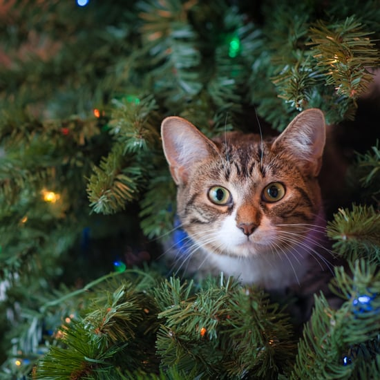 How to Stop a Cat From Climbing the Christmas Tree