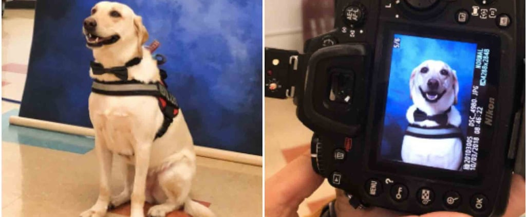 Service Dog Poses For School Picture