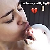 Miley Cyrus's Pet Pig Bubba Sue Dies 2019