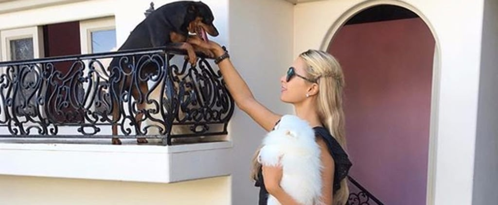 Paris Hilton's Miniature Mansion For Her Dogs Is the Most Paris Hilton Thing Ever