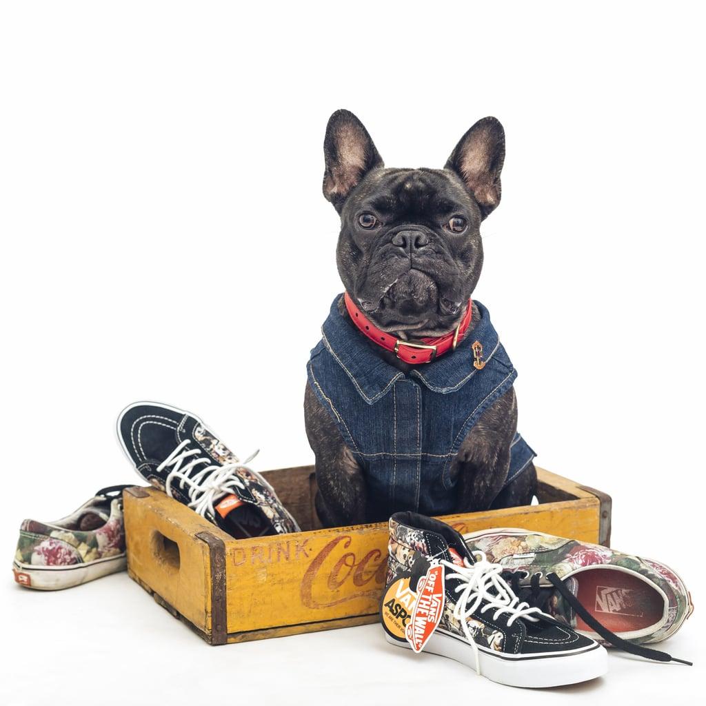 Vans Unisex SK8-Hi Slim x ASPCA Dogs