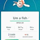 """Goldeen aka """"Um a fish"""""""