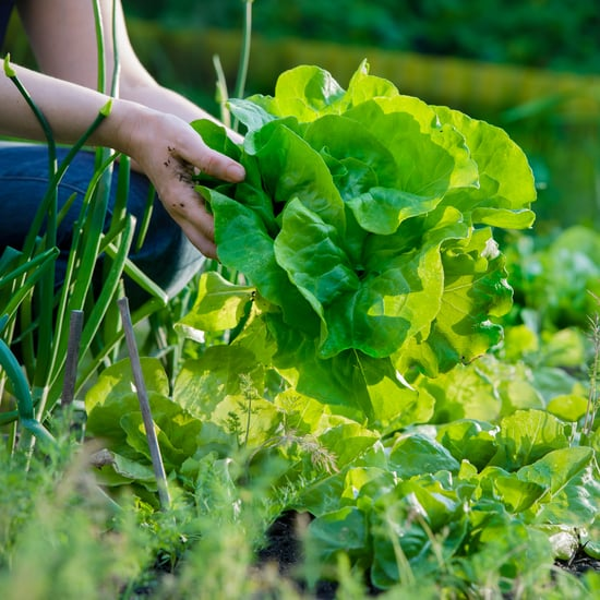 كيف يمكنكم التخلص من اليسروعات في حديقتكم العضوية