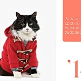 Calendars with cats on them — you're welcome.