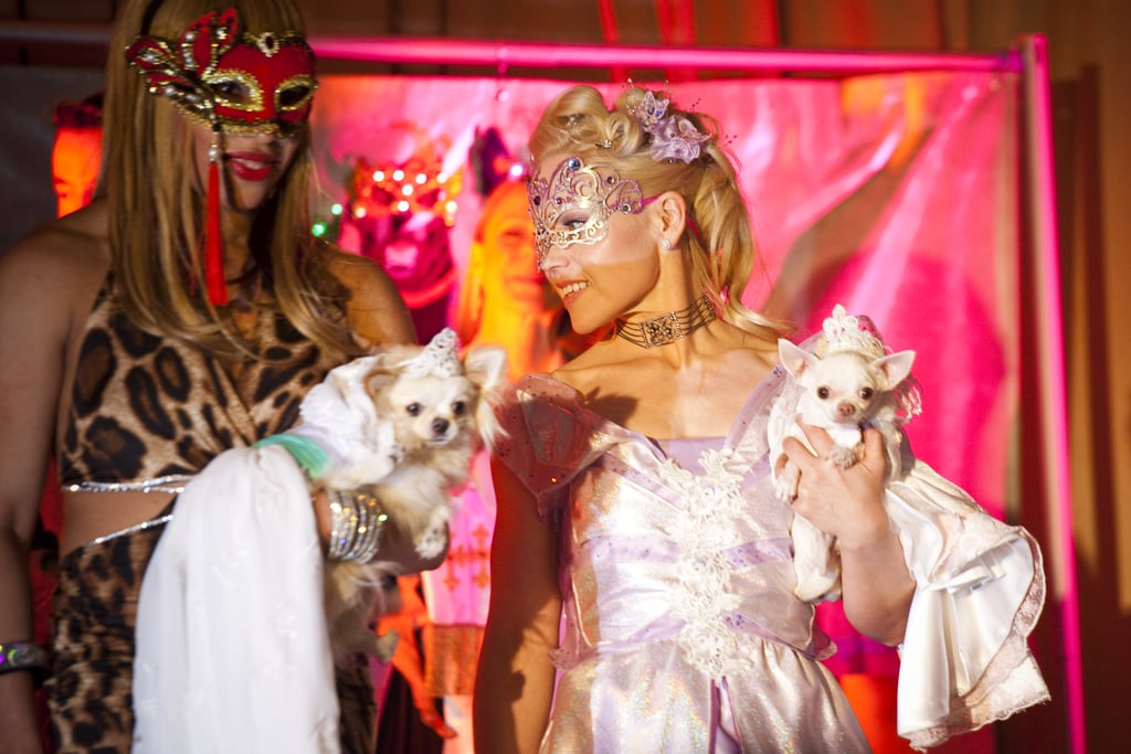 Amazing Grace and Daisy participate in a wedding ceremony at the doggie fashion show.