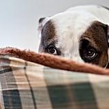 Listen to Your Dog's Behavior