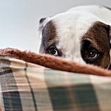 Listen to Your Dog's Behaviour