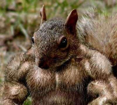 Go Nuts! Eat Healthy Fats