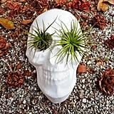 Place two of your favorite plants in the empty eye sockets of this semicreepy plant pot ($42).