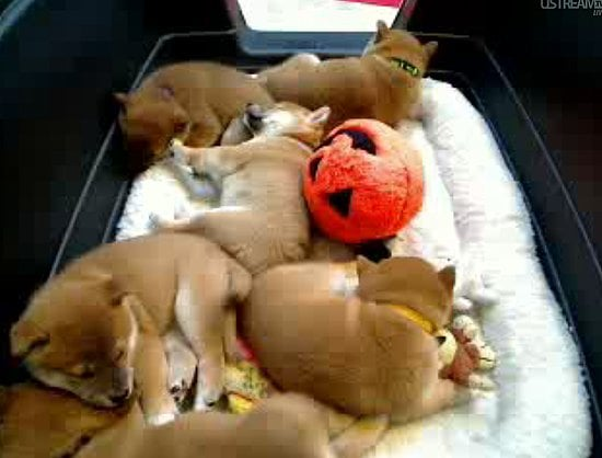 How Many Hours Have You Spent Watching the Puppy Cam?