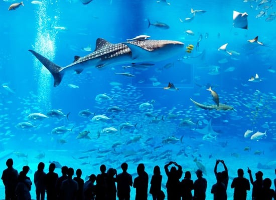 Worlds Largest Fish Tank