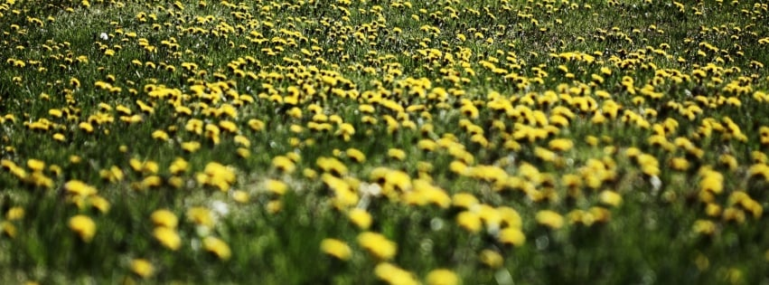 March means (slightly) warmer days and frolicking among flowers. Celebrate the floral season with a Field of Dandelions cover photo.