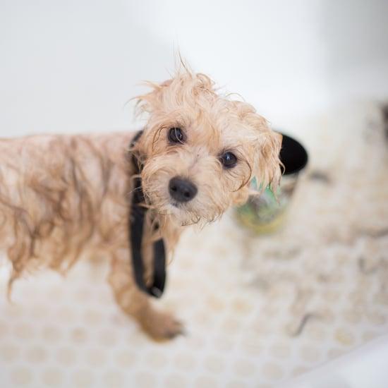 Aquapaw Pet Bathing Tool Review