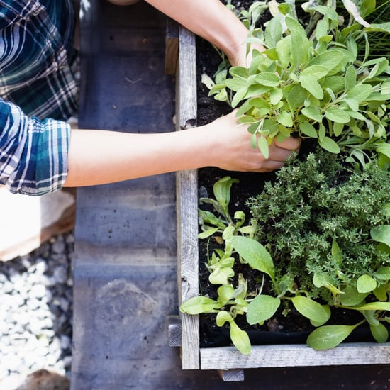 Where to Buy Edible Garden Plants Online