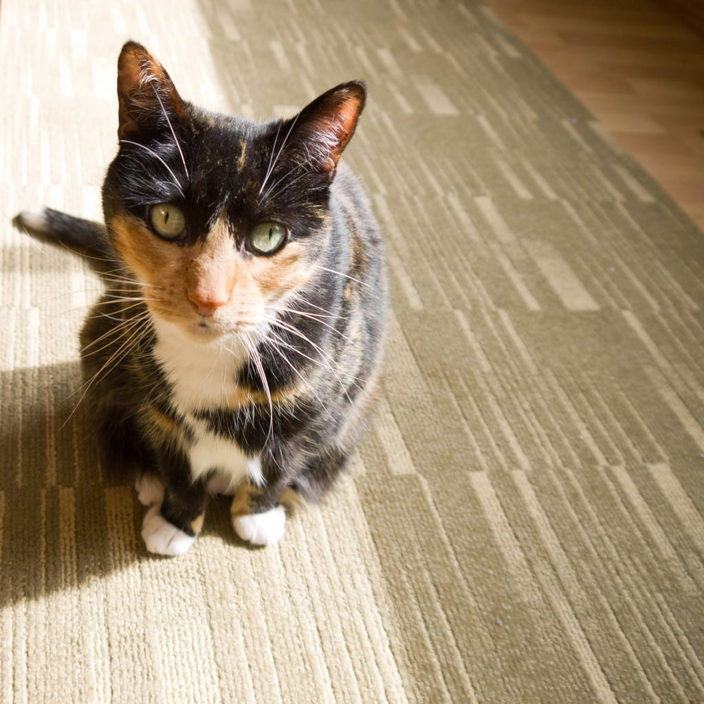 Happy Cat: The Great Catnip Challenge