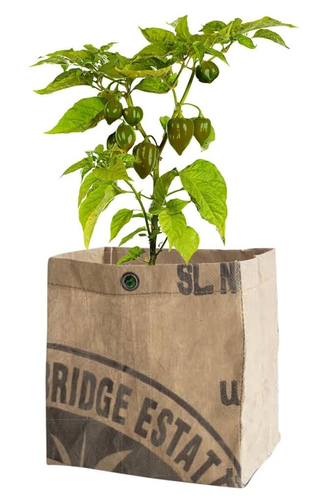 Organic Veggie Growing Kit ($25)