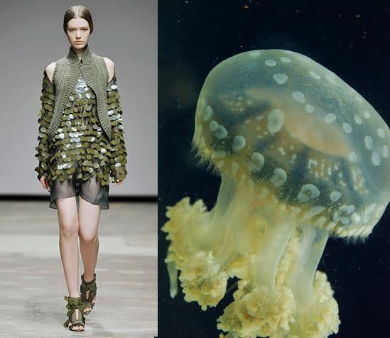 Jellies Are Back