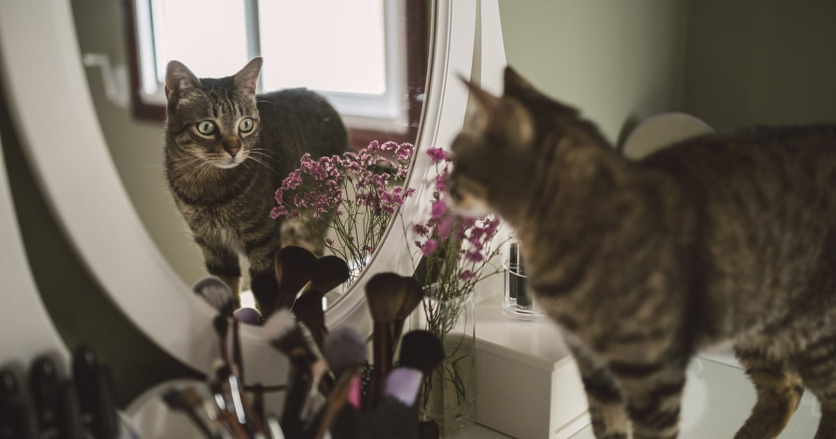Everything You Need to Know About Why Your Cat Scratches Mirrors, Straight From Vets