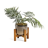 Areca Transparent Lines Plant in Pot