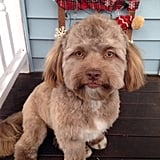 The Dog That Looks Like a Person