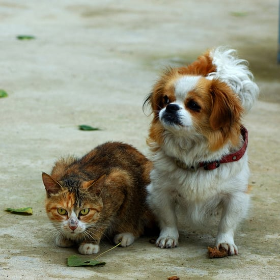 Most Popular Dog and Cat Names of 2011