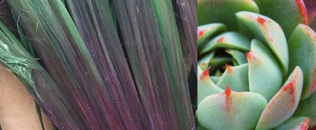 Succulent-Coloured Rainbow Hair Is the Latest Botanical Trend to Try and Dye