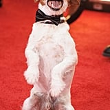 Uggie indulges adoring fans with a trick for the cameras.