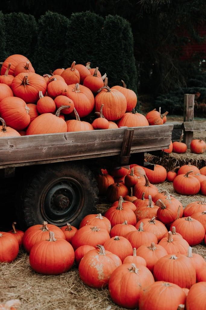 Pumpkin Patch iPhone Wallpaper