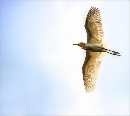 Beautiful Bird Pictures