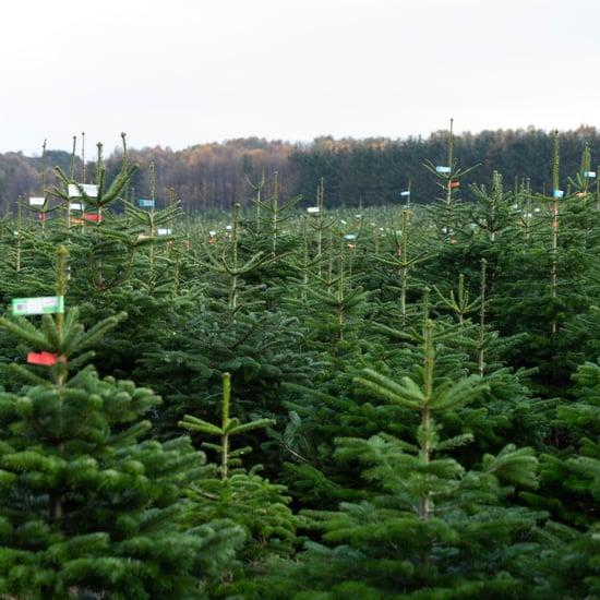 Cheap Lidl Christmas Tree
