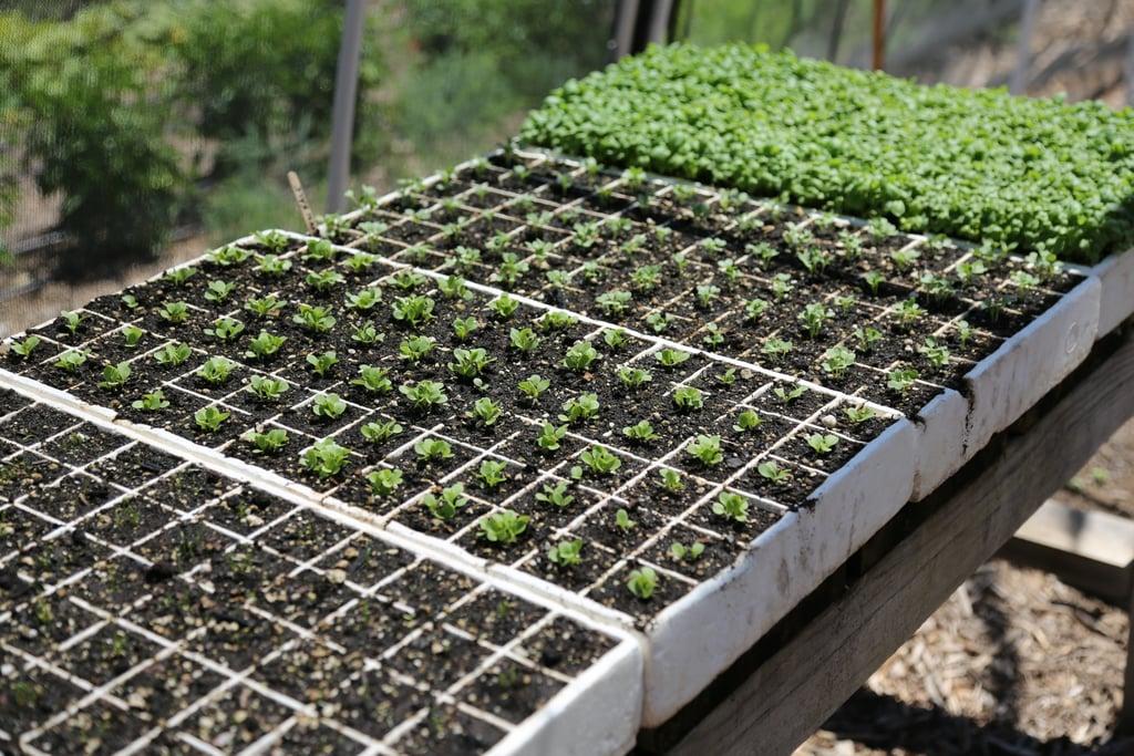 Set Up a Seedlings Station