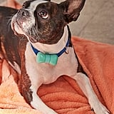 WonderWoof Bow Tie Dog Activity Tracker
