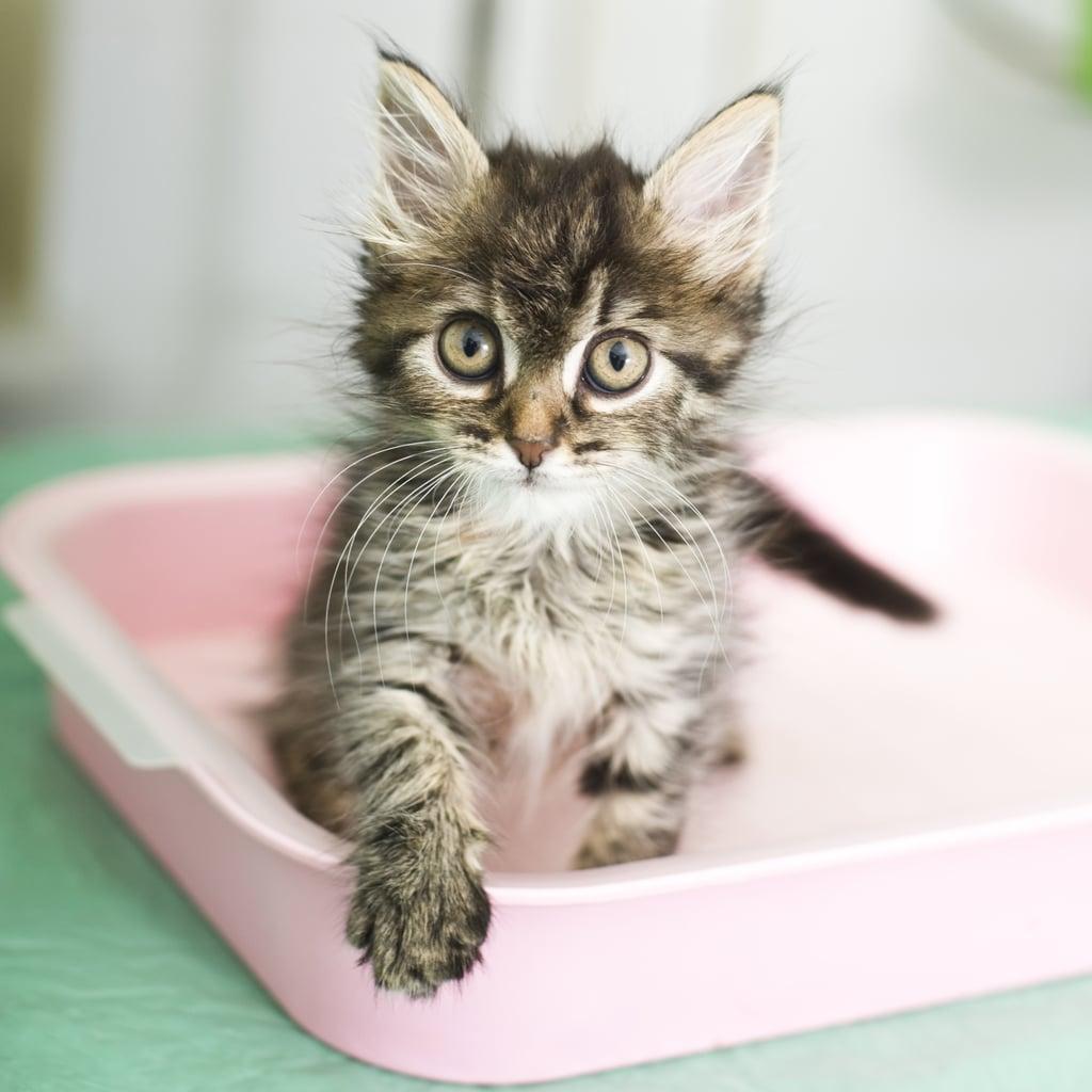 The Kitty Box