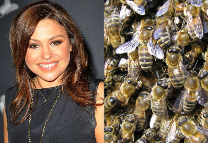 Rachael Ray and the Beyhive
