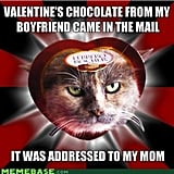 Apparently chocolates aren't for everyone, and this cat takes that to a literal level.