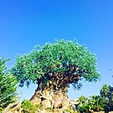 Enjoy the Show Inside The Tree of Life