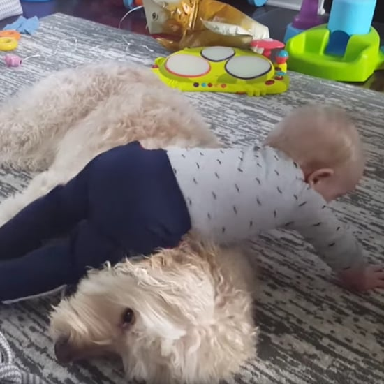 Baby Trying to Nap on His Dog
