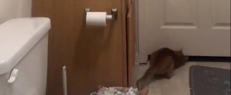 Video of Cat Opening the Bathroom Door
