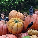 Pumpkin Ron
