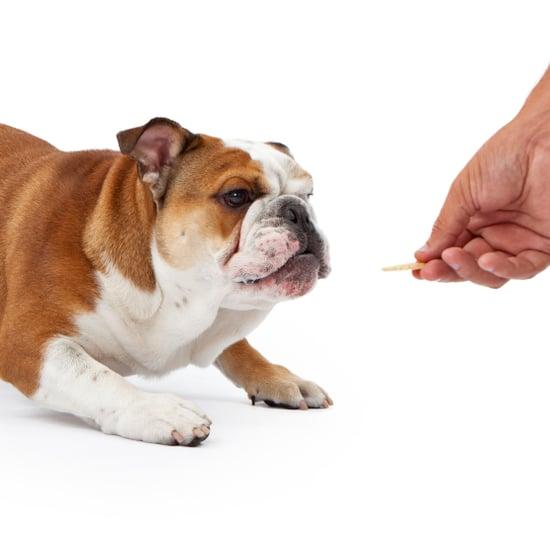 Give Tiny Treats While Dog Training
