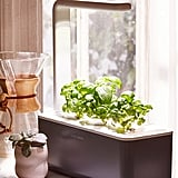 Click & Grow Smart Herb Garden 3 Starter Kit