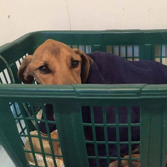Dog Rescued From Garbage Bag