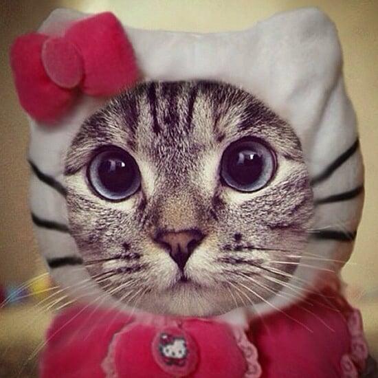 & Funny Cat Costumes | POPSUGAR Tech