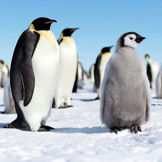 What Do Penguins Live?