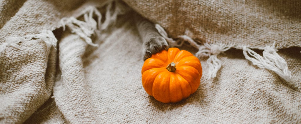 50 Fun Things to Do This Fall That Cost Close to Nothing